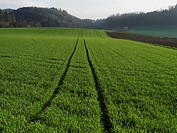 Burgdorf, field, barley, grain, canton Bern, scenery, agriculture, sowing, Switzerland, track, trace, winter barley