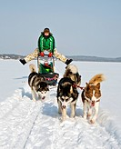 man in dog sledding travel across snow field