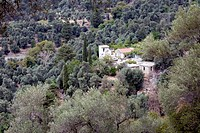 Landscape of Crete countryside: framed by olive trees