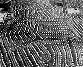 Aerial view of Levittown, New York, during its construction. Photograph, 1949.