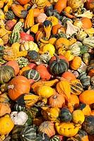 Germany, Bavaria, Wuerzburg, Variety of pumpkins