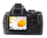 flower on digital camera display showing holidy travel or vacation concept