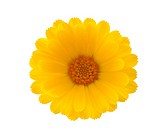 Yellow flower with clipping path