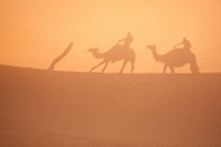 Camel shadows on Sahara sand in Morocco. Horizontal shot.