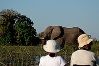 Elephant in front of a Mokoro with tourists in the Okavango Delta, Botswana.