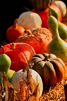 Pumpkins,corn and gourds are arranged on hay