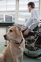 Man in a wheelchair working at desk in a home office with a service dog
