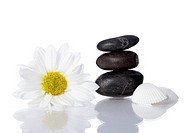well being concept with flower, stones and shells on white background