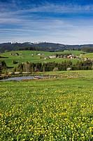 Meadow near Breitnau with view of Mt Feldberg, near Hinterzarten, Black Forest, Baden-Wuerttemberg, Germany, Europe
