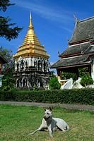 Temple dog in front of the Wat Chiang Man temple, Chiang Mai, Thailand, Asia