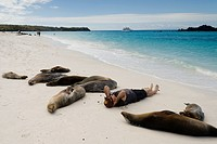 Tourist lying on the beach with Galapagos sea lions Zalophus californianus wollebacki, Gardner Bay, Espanola Island, Galapagos Islands, Ecuador