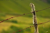 barbwire fence at Northern spain