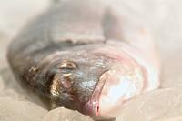 ein Seefisch vor der Zubereitung