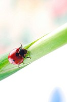red ladybird on green leaf.