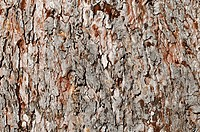 Aged Bark that can used as a nature background