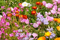 Colorful garden bed of brightly lit flowers