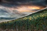 Landscape of vineyards of Monferrato, Italian hills
