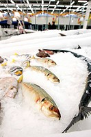 fish stored on ice at the fish market