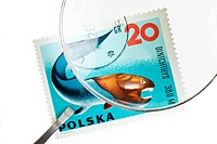 POLAND _ CIRCA 1967: A stamp printed by Poland shows ancient fish Dinichthys, circa 1967.
