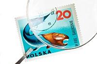 POLAND _ CIRCA 1967: A stamp printed by Poland shows ancient fish Dinichthys, circa 1967.