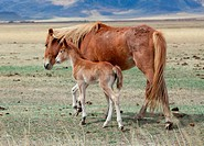 Foal and its mother in the pasture