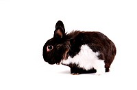 black and white little easter hare on white background