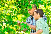Father and son looking at the fruits of an unripe cherry tree