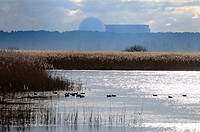 England, Suffolk, Minsmere. Waterfowl on a lake at Minsmere RSPB nature reserve, with Sizewell B nuclear power station in the distance