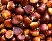 lots of sweet chestnuts fresh and ready to roast