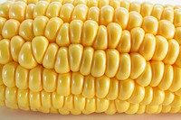 Close Up of Corn Cob