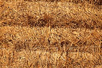 Close_up image of a pile of haystack.