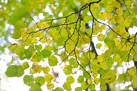 Autumn tree branch with yellow leaves soft focus photo