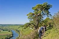 Hiking track along the Neckar River near the Rock Gardens, Hessigheim, Neckar, Baden-Wuerttemberg, Germany, Europe