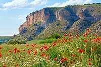 Beautiful summer mountain landscape with red poppy and white camomile flowers.