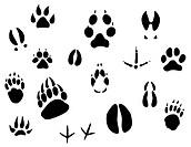 Set of animal footprints for ecology design