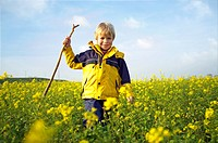 Young boy, walking with a stick trough a mustard field