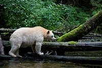 Great Bear Rainforest, British Columbia, Canada.