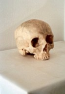 A Human Skull on a Table by Jefferson Hayman