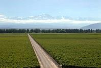 Argentina, Mendoza, Luigi Bosca Winery