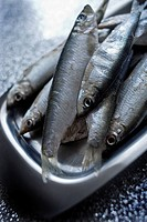 Uncooked sprats on a stainless steel plate