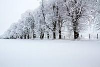 Allee mit Raureif und Schnee in der Uckermark, Brandenburg