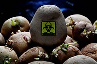 Biohazard Symbol On Potato