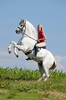 Pure Spanish Horse, Andalusian. Stallion Napoleon with woman rider, rearing