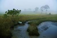 protected landscape area, Plouhinec, Bretagne, France