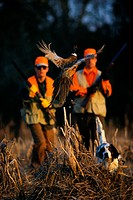Pheasant Trying to Escape Hunters