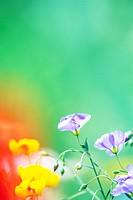 Purple and Yellow Wildflowers