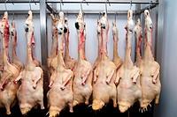 Foie gras factory, Preixana, L´Urgell, Catalonia, Spain
