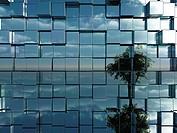 baum spiegelt sich in chromewürfeln _ 3d illustration