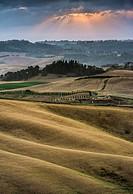 Rolling hills, cornfields at dusk, Villamagna, Tuscany, Italy, Europe