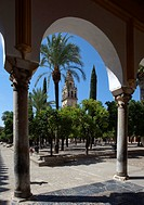 Patio de los Naranjos, Mezquita, Córdoba, Andalusia, Spain, Europe